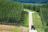 Germany, Bavaria, hop fields at hop-planting area Hallertau (Holledau) | Deutschland, Bayern, Hopfengarten im Hopfenanbaugebiet Hallertau (Holledau)