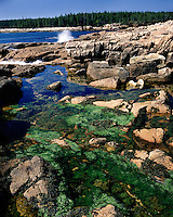 Algae in a tidal pool in Ship Harbor; Acadia National Park, ME