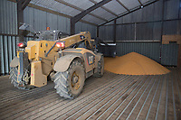 Tele handler pushing up maize corn in a store<br /> Picture Tim Scrivener 07850 303986<br /> &hellip;.covering agriculture in the UK&hellip;.