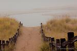 Autrain river, golden beach grass, fog