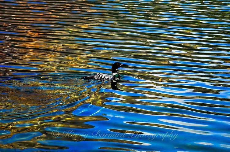 &quot;LONELY LOON&quot;<br />