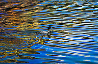 """LONELY LOON""<br />