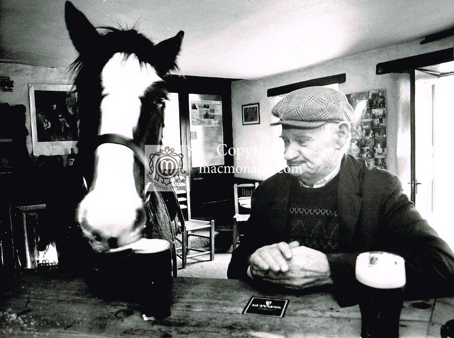 The horse that enjoed Guinness in Derrynane, County Kerry.<br /> Picture by Don MacMonagle
