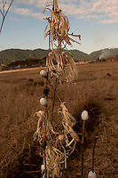 A Shaman performs a ritual at a prayer hut that lies in an empty field surrounded by unbroken view of sky and land in all directions. A little chicken is sacrificed and blood is sprayed over the ritual objects woven out of straw. Eggshells decorate these ritual objects.