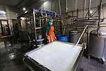 Palestinian labourers work in a dairy factory in Beit Lahia in the northern Gaza Strip, on January 28, 2019. Gaza's dairy sector has been severely damaged by Israel's separation policy, blockade and three rounds of hostilities. The sector is now highly dependent on imports for production and consumption and is unable to compete with imported products. Photo by Ashraf Amra