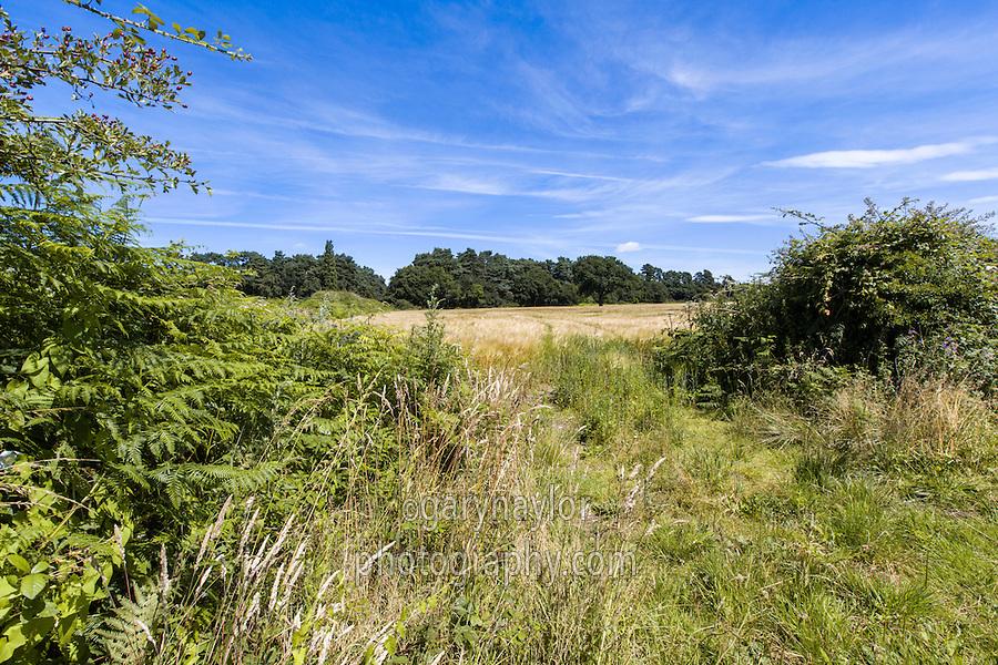 Field entrance to spring barley field - Norfolk, July