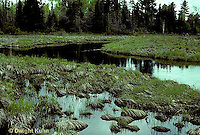 1E17-028x  Mayfly -stream floodplain habitat of endangered mayfly -  Siphlonisca aerodromia