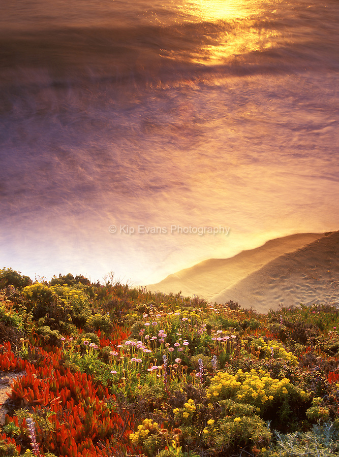 Big Sur wildflowers with the reflection of the sun in the incoming waves.
