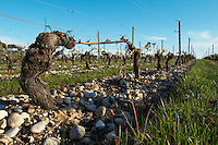 gravelly soil old vine chateau belgrave haut medoc bordeaux france