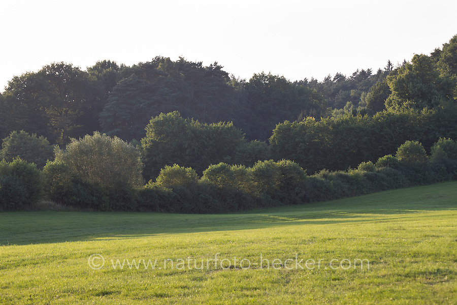 Wiese, Wiesen, Weide, Weiden, Wiesenlandschaft, Weidelandschaft, Hecke, Knick, Knicks, Knicklandschaft, Heckenlandschaft. Meadow, meadows, range land, pasturage, grazing land, Hedge. Hamfelder Hof, Schleswig-Holstein