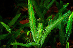 Green fern in sunlight