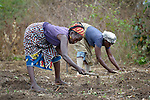 Women working on a six-acre farm in Mount Barclay, Liberia where several dozen women are farming cassava. The income-generating project is administered by the National Federation of Women Employees and Allied Workers, with financial support from United Methodist Women.