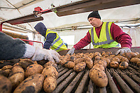 Farmlabour picking off clods, Grimme Varitron 200 - Lincolnshire, October