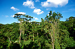 Costa Rica: Tropical Rain Forest..Photo copyright Lee Foster, 510/549-2202, lee@fostertravel.com, www.fostertravel.com..Photo #: caribb107