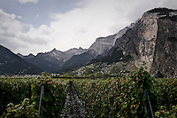 Vineyard in Switzerland