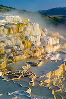 Minerva Terrace<br />