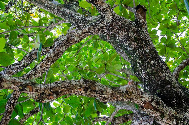 Musgos e líquens em tronco de árvore, Paraty - RJ, 01/2016.