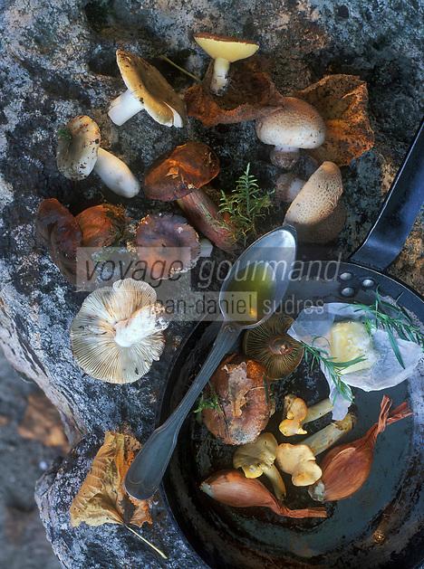 Europe/France/Limousin/19/Corrèze : Poêlé de champignons du facteur