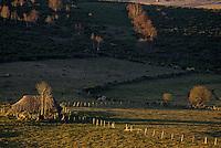 Europe/France/Auvergne/15/Cantal/Env de Paulhac: Buron au toit de chaume