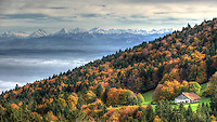 A lone farming hut in a forest of Autumn colours with the Alps rising in the background