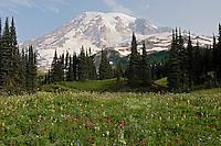 Mount Rainier and wildflowers.  Mount Rainier National Park, Washington.  Summer.