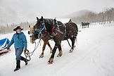 USA, Colorado, Aspen, wrangler Ali Wade walks her team of horses to hook them up to the sleigh, Pine Creek Cookhouse, Ashcroft