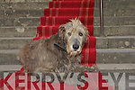 Ballyseede CAstle Irish Wolfhound  Copyright Kerry's Eye 2008