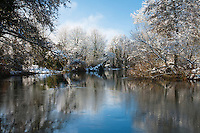 Winter on the River Kennet above Padworth Mill, Berkshire, Uk