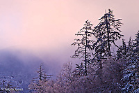 Backlit trees on mountain slope in winter, Great Smoky Mountains National Park, North Carolina.