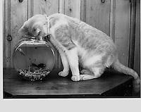 Catfish Fishbowl By Jonathan Green