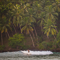 Mirissa Beach, man surfing in front of palm trees, South Coast of Sri Lanka, Asia. This is a photo of a man surfing in front of palm trees on Mirissa Beach, Sri Lanka, Asia. Mirissa Beach is a popular surfing spot on the South Coast of Sri Lanka.