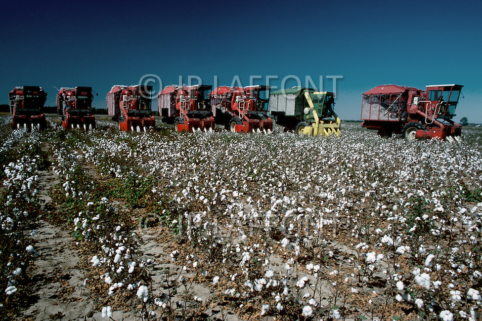 Mississippi, USA, September, 1978. Agriculture - cotton picking.