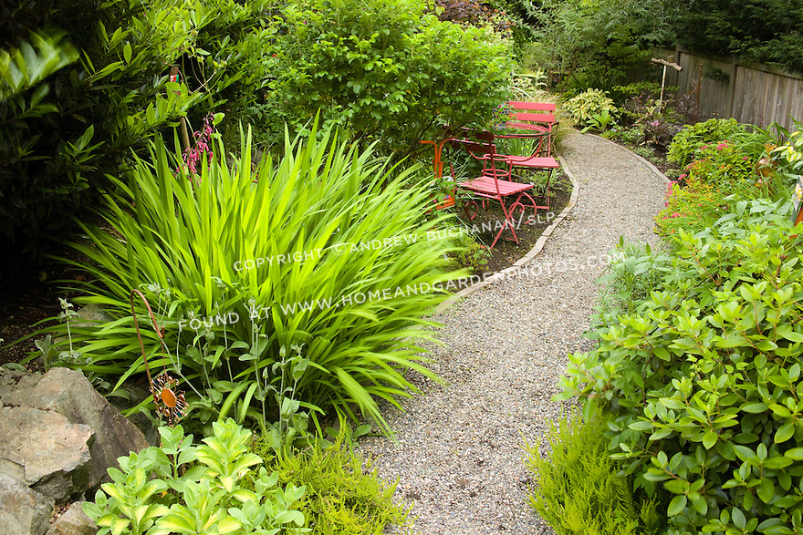 a gravel garden path leads between lush perenniual beds of crocosmia, sedums, azalea, spirea, and other shribs, past red painted metal chairs, and disappears around a bend in this residential bakyard garden that has removed its lawn in place of lush beds of flowers and foliage