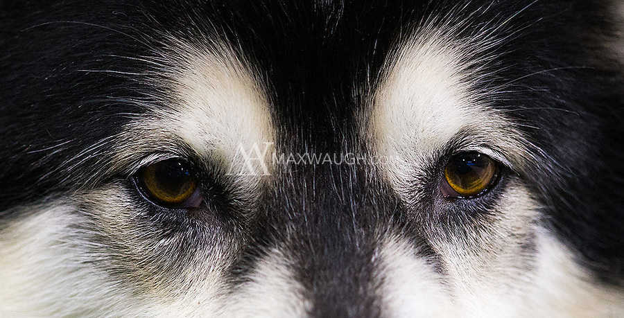 The eyes of Dubs.