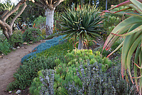 Pathway through succulent garden at San Diego Botanic Garden