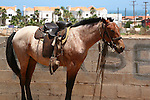 HORSE SADDLED and READY to TAKE on POTENTIAL RIDER