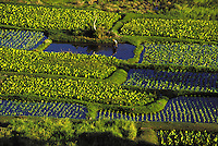 A worker prepares to plant taro in Keanae, Maui.