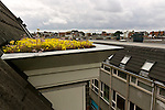 Green Roof, Eerste Rozendwarstraat