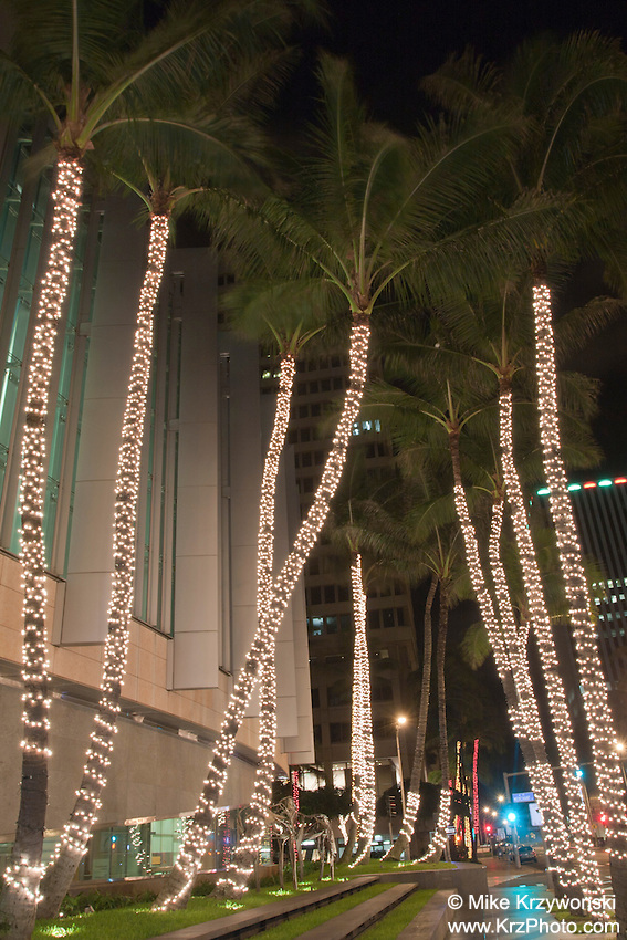 Palm trees decorated w/ Christmas lights in Downtown Honolulu, Oahu, Hawaii