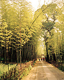 CHINA, Hangzhou, road amid bamboo forest leading towards temple, Meijai Wu