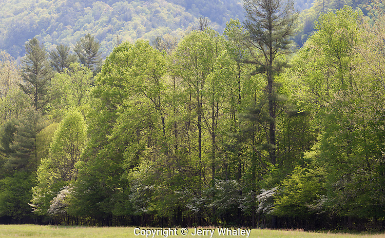 Spring Foliage, Cataloochee Cove, Great Smoky Mountains NP, NC