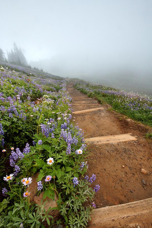 Trail through field of wildflowers in fog, Edith Creek Basin, Paradise, Mount Rainier National Park, Washington, USA