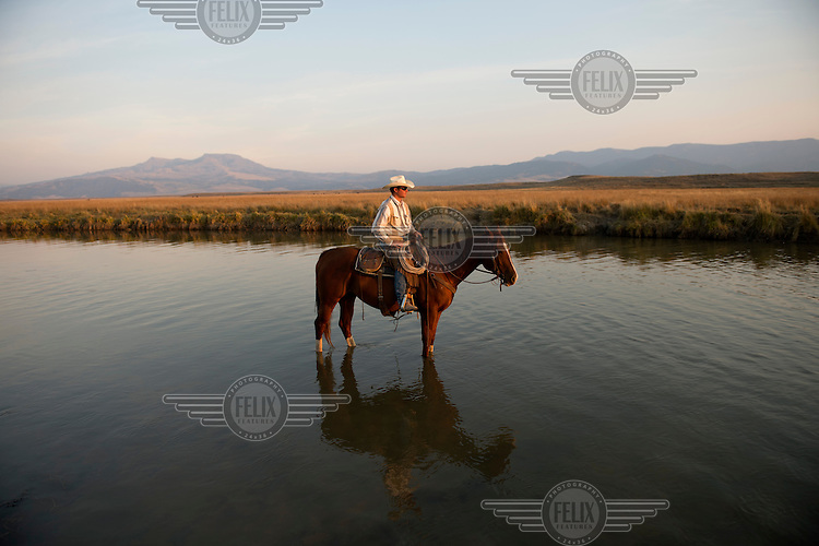 Ranch-hand Stephen Becklund rests his horse in midstream while out for a sunset ride at the J Bar L Ranch in the Centennial Valley in southern Montana. The ranch is unusual in that it finishes (the process whereby the animals are brought to market weight) its cattle on grass on the ranch rather than transporting them to a feedlot (where they are kept in pens and fed a controlled diet of grains and roughage), which is the norm in intensive farming...