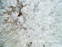 63808-03206 Aerial view of snow covered trees Marion Co. IL