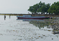 Local residents harvest seaweed near Vila, Atauro Island, Timor-Leste (East Timor)