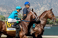 "ARCADIA, CA. OCTOBER 7: #6 Roy H, ridden by Kent Desormeaux, in the post parade of the Santa Anita Sprint Championship (Grade l)""Win and You're In Sprint Division"" on October 7, 2017, at Santa Anita Park in Arcadia, CA.(Photo by Casey Phillips/Eclipse Sportswire/Getty Images)"
