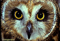 OW05-083z  Short-eared Owl - close-up of face -  Asio flammeus