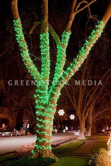 Green Christmas lights decorating a tree on a residential street. San Jose, California, USA