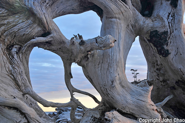 Abstract view through a driftwood rootball at Second Beach in Olympic National Park