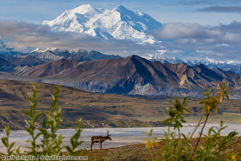 during the Alaska Photo Treks 2015 Denali Photo Workshop in Denali National Park at Camp Denali.  August  Summer